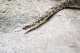 Snake on a Rock