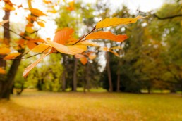 Autum Leaves