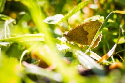 Butterfly in the Grass
