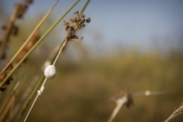 Snail on dry Grass