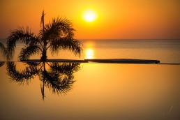 Palm Tree in Sunrise